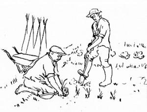 gardening Drawing 009